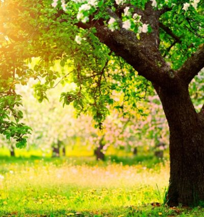 beautiful-garden-wallpaper_090701774_195